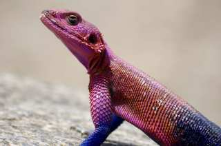 Beauty Agama
