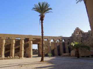 Palm tree on the territory of Karnak temple