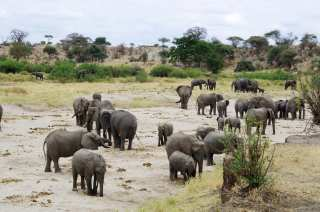 Herd of elephants resting