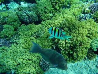 The underwater world of Hurghada