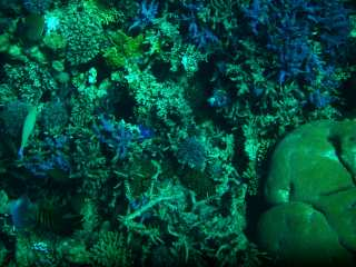 Vegetation at the bottom of the Red Sea