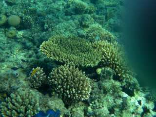 Corals - decorations of the Red Sea