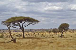 The vast expanses of Africa