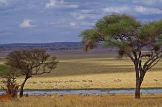 Open spaces of Africa