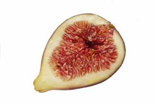 Half a fig on a white background