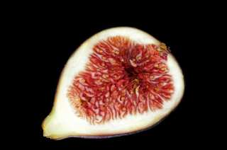 Cut figs on a dark background