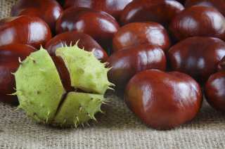 Chestnuts collected in the fall