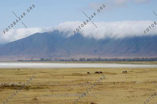 The vast pastures of Tanzania
