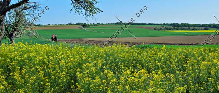 Germany. Spring fields in Hesse