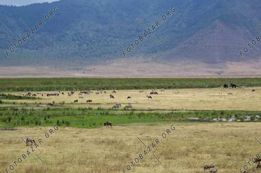 Animals in the open spaces of Tanzania National Park
