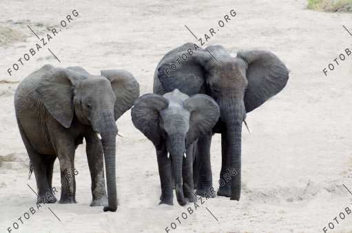 A family of three elephants