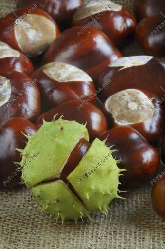 Signs of autumn - chestnuts