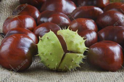 Chestnuts - Autumn Decoration